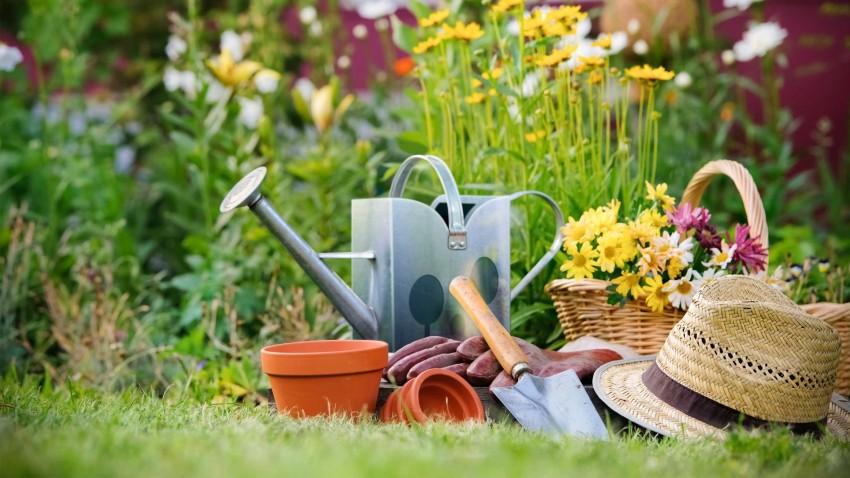 Какие цветы посадить на даче — лучшие неприхотливые цветы и кустарники на весь год